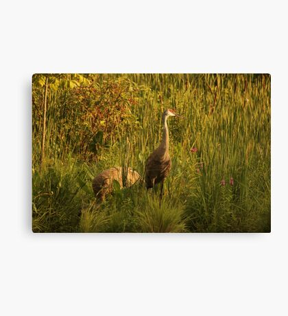 Sandhill Cranes on shore of Lake Canvas Print