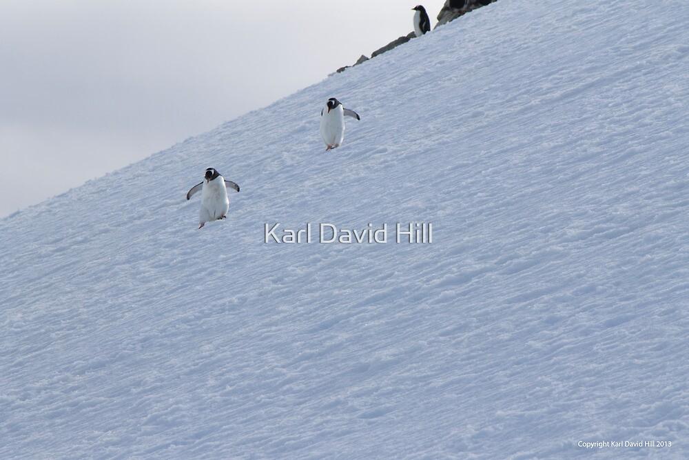 Penguin 015 by Karl David Hill