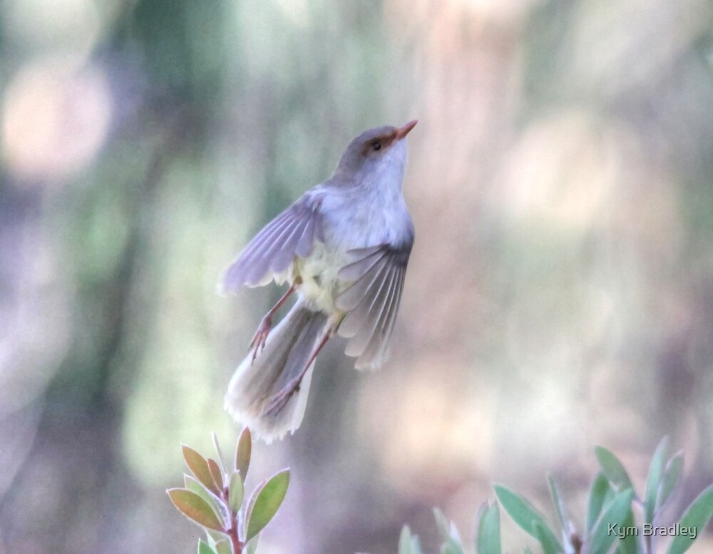 Female Wren , Off like a Rocket by Kym Bradley