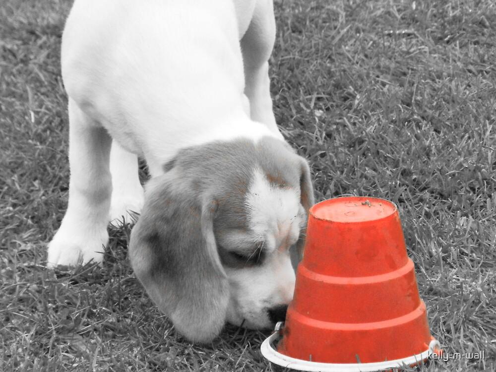 Playful Beagle Puppy. by kelly-m-wall