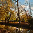 Autumnal Colours by Billy Hodgkins