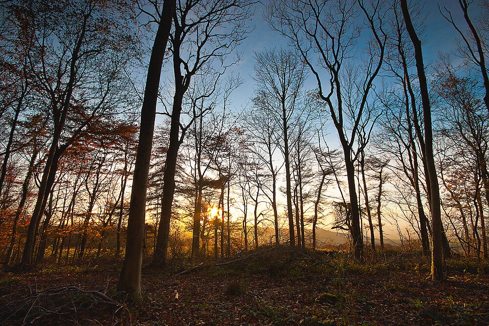 Late Autumn Woodland by Billy Hodgkins