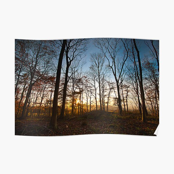 Late Autumn Woodland Poster