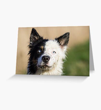 Harrie Greeting Card