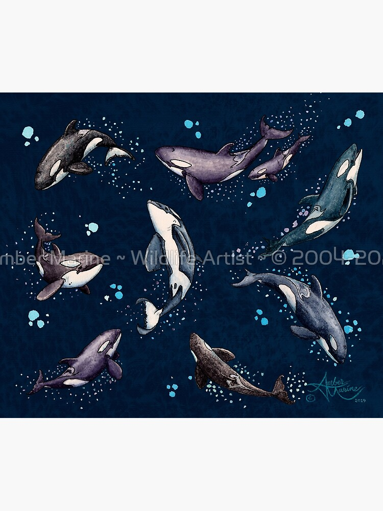 """""""Orca Pod in Watercolor"""" by Amber Marine, (Navy Blue Version) Killer Whale Art, © 2019 by AmberMarine"""
