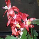 Cactus Flower in Bloom by David Workman