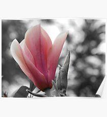Colour filter flower Poster