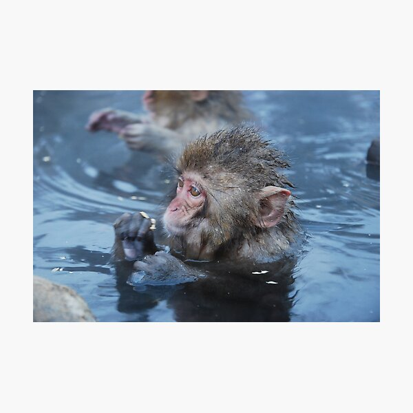 Baby snow monkeys in the hot springs Photographic Print