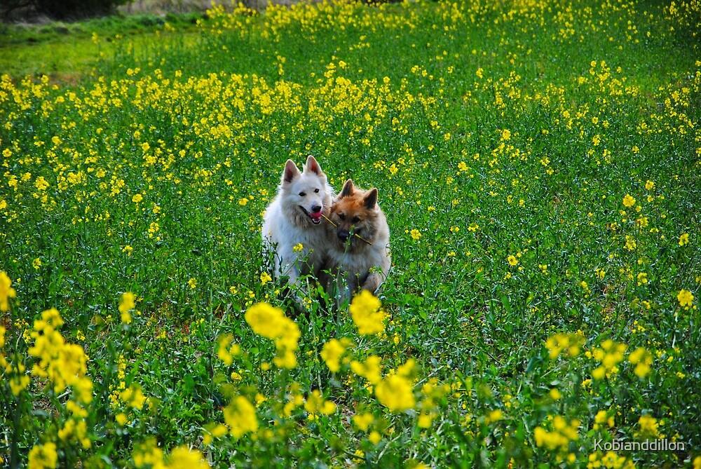Happy Field by Kobianddillon