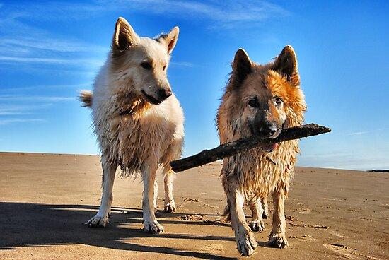 My Stick! by Kobianddillon