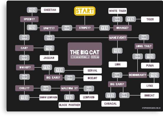 Big Cat Identification Chart by Stephen Wildish