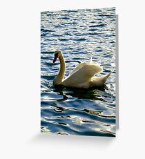 Swan, Lake Bled, Slovenia Greeting Card