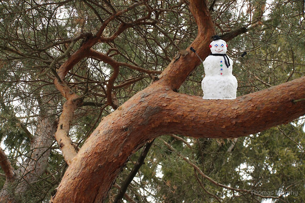 Snowman Climbed Tree by Thomas Murphy