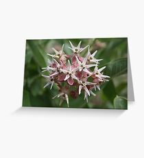 Insect on a Flower Greeting Card