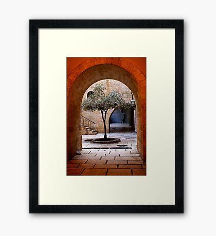 An Olive Tree Grows In Jerusalem Framed Print
