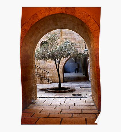 An Olive Tree Grows In Jerusalem Poster