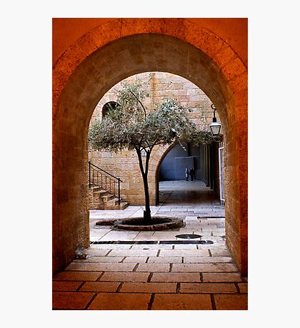 An Olive Tree Grows In Jerusalem Photographic Print
