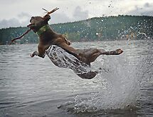 Jumping for Joy by Deanna Maxwell