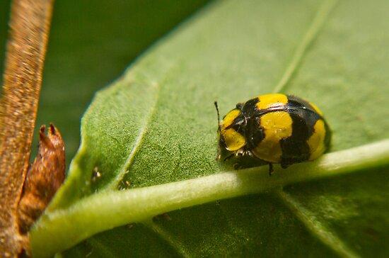 Ladybird, Ladybird Fly Away by Bryan Freeman