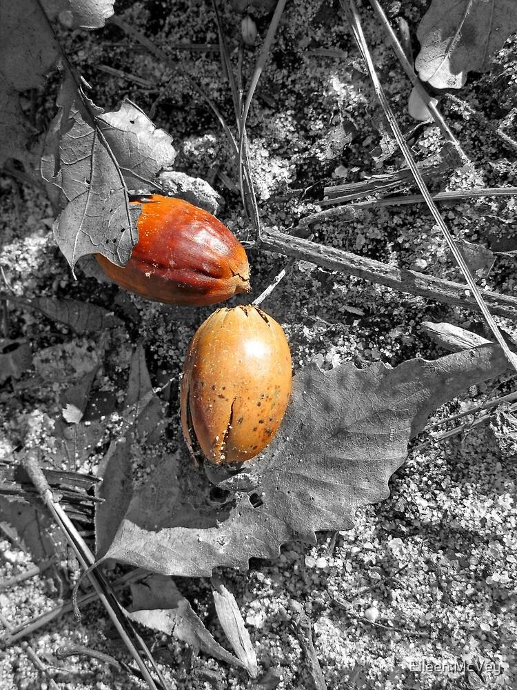 Nuts! by Eileen McVey