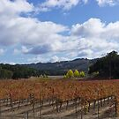 Paso Robles Autumn by Mike Herdering