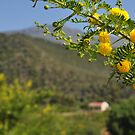 Blooming hillside house by Karen01