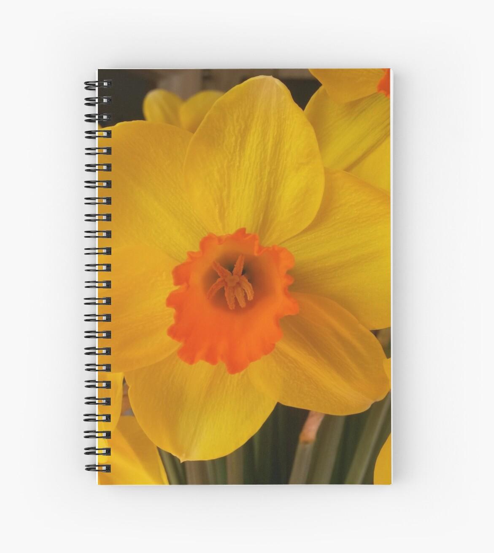Daffodil by plumspics
