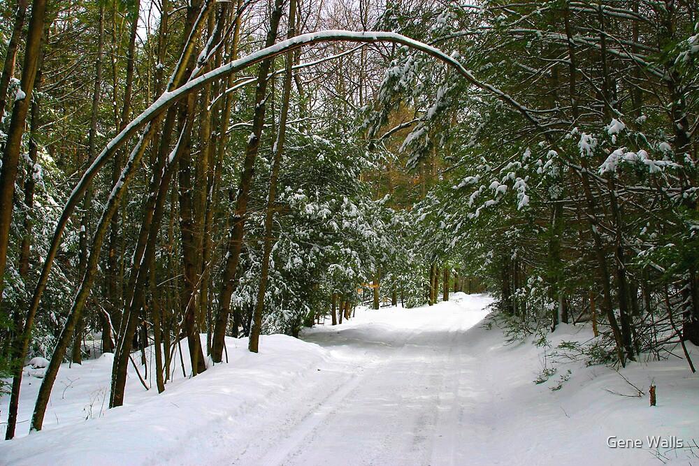 Snowy Lane by Gene Walls