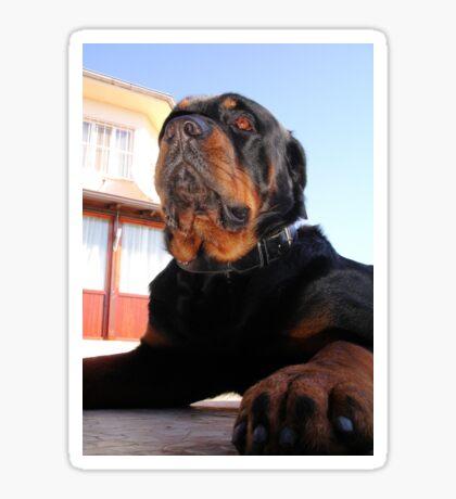 Regal and Proud Male Rottweiler Portrait Sticker