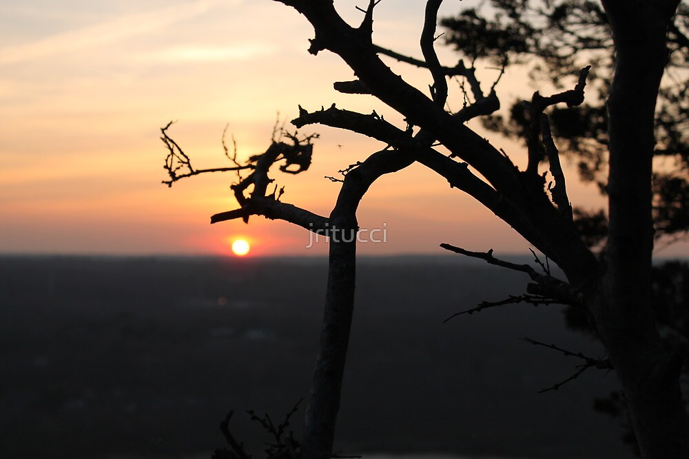 Tree Sunset by jritucci