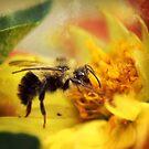 Bee in a Flower by Tamara Brandy