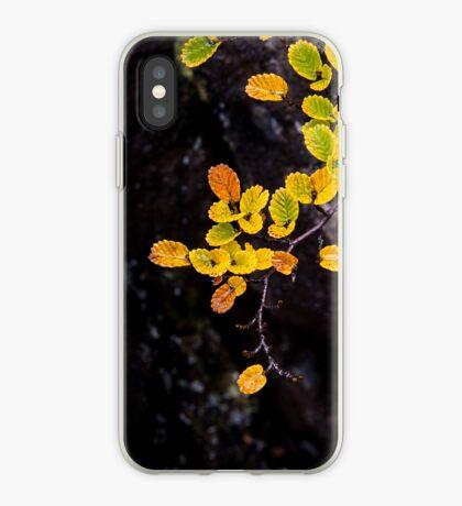 Fagus at Mt Field, Tasmania iPhone Case