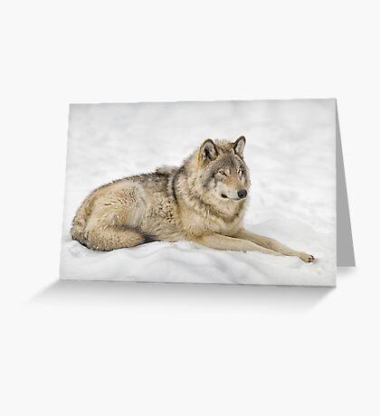 Timberwolf at Rest Greeting Card