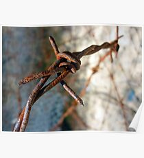 Barbed Wire Flower... Poster