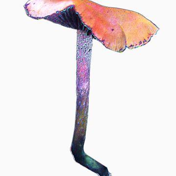 mushroom magic mushroom by Randle