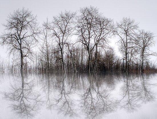 Winter Trees by Keri Harrish