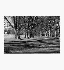 Majesty of Gostwyck Photographic Print