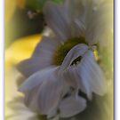 Gentle Dreaming by Lozzar Flowers & Art