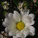 Happy Day by Lozzar Flowers & Art
