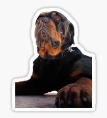 Regal and Proud Male Rottweiler Portrait Isolated Sticker