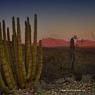 Setting sun over the desert by Penny Fawver