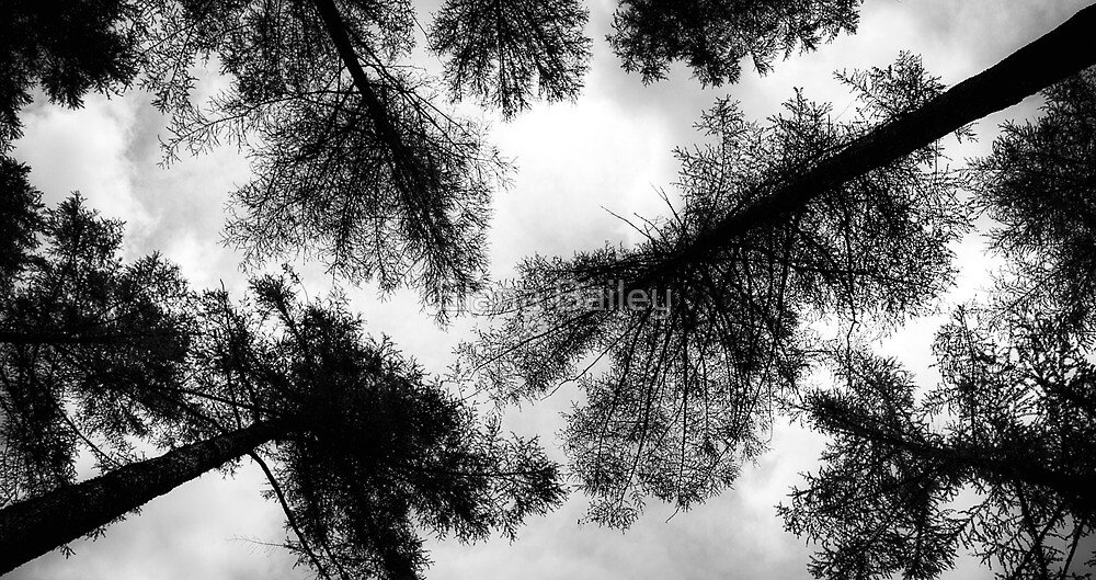 Trees above, Lake Buttermere, UK by Elana Bailey