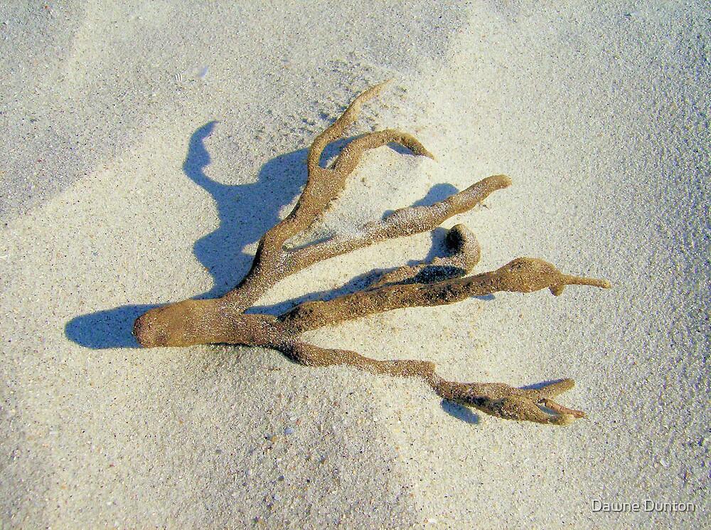 Staghorn Coral by Dawne Dunton