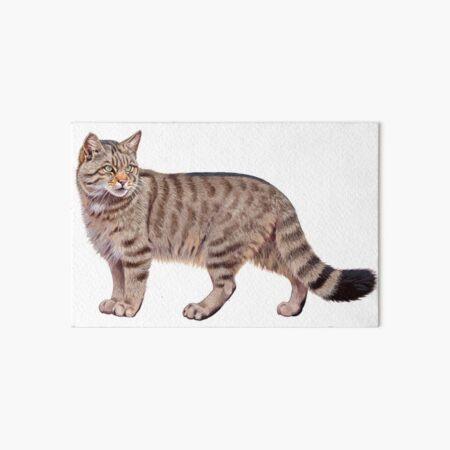 European Wild Cat Art Board Print