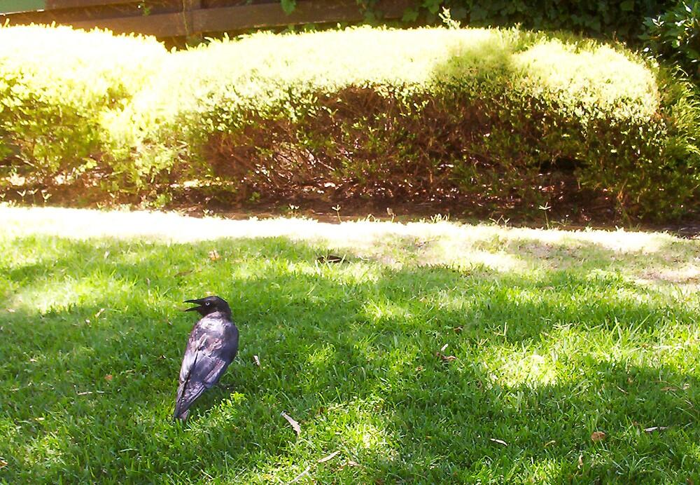 Hot Crow - 29 12 12 by Robert Phillips