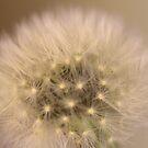 ~Seeds~ by Debra LINKEVICS