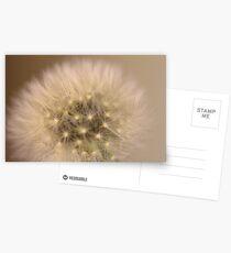 ~Seeds~ Postcards