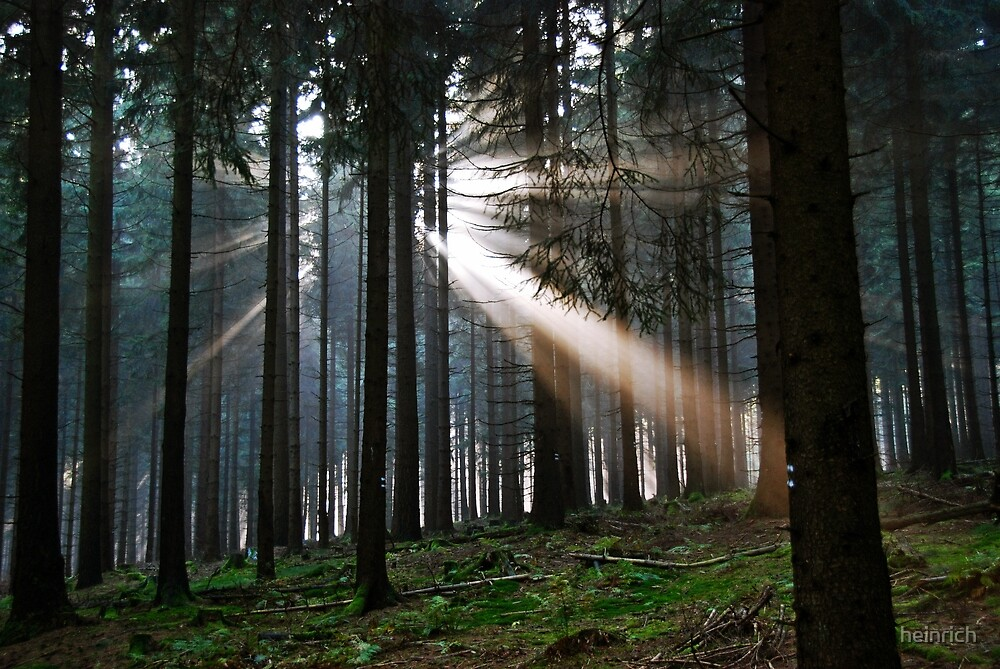 Rays of light by heinrich