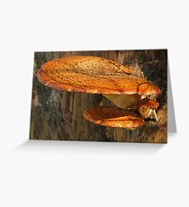 Natural Shelf Greeting Card