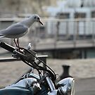 Biker Bird! by Pamela Jayne Smith